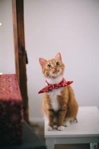 CBD für die Katze