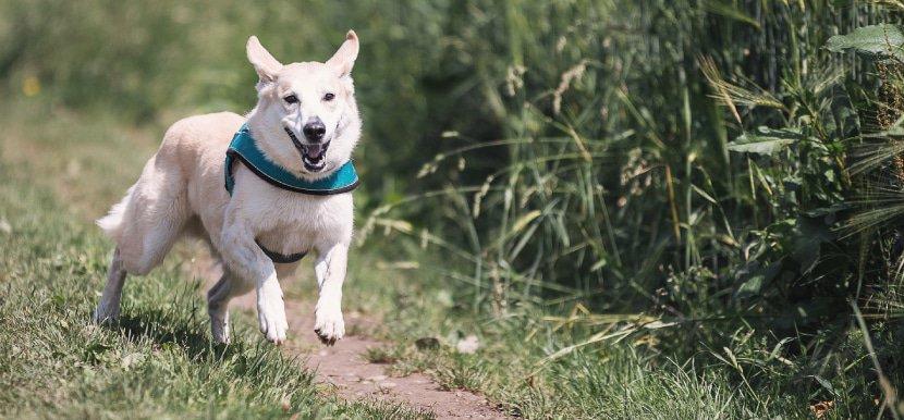 CBD für Hunde Erfahrungen